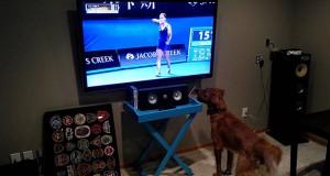 Αυτός ο σκύλος πραγματικά λατρεύει το Τένις (Video)