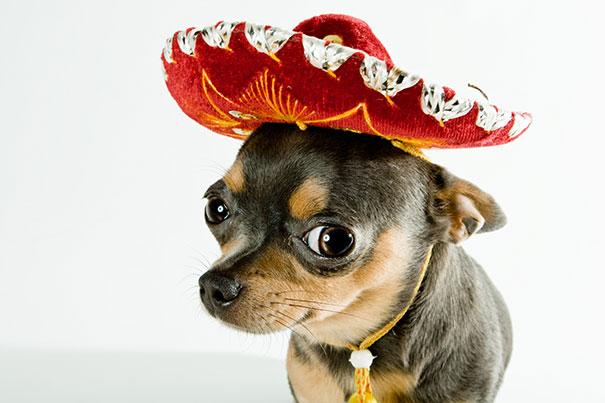 Όταν οι σκύλοι χορεύουν Salsa σαν επαγγελματίες