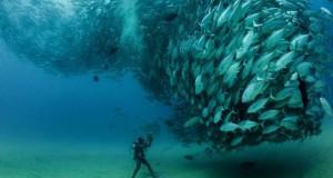 Τυφώνας από ψάρια