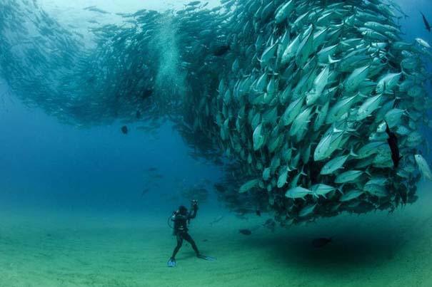 Τυφώνας από ψάρια (1)