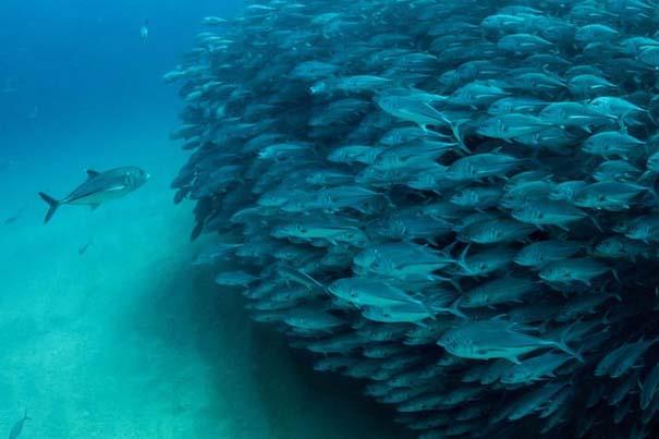 Τυφώνας από ψάρια (2)