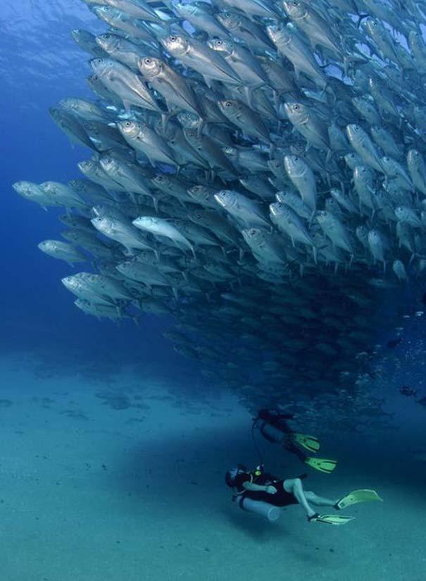 Τυφώνας από ψάρια (3)