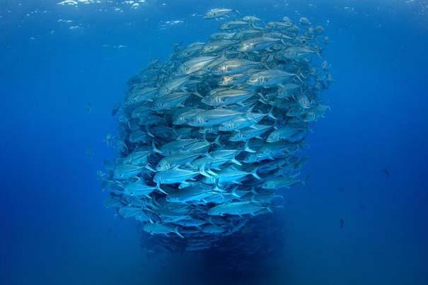 Τυφώνας από ψάρια (5)