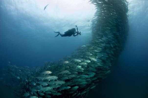 Τυφώνας από ψάρια (6)