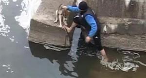 Αδέσποτος σκύλος τρελαίνεται από ευγνωμοσύνη για τον άνθρωπο που το έσωσε από πνιγμό (Video)