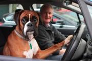 Ανυπόμονος σκύλος κορνάρει για να γυρίσει ο ιδιοκτήτης του από τα ψώνια
