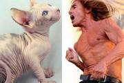 Διάσημοι που μοιάζουν με περίεργα πλάσματα (7)