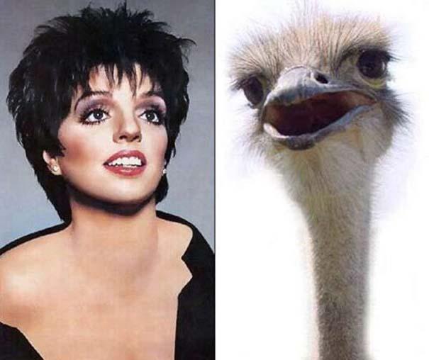Διάσημοι που μοιάζουν με περίεργα πλάσματα (9)