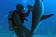Δύτης ακινητοποιεί καρχαρία