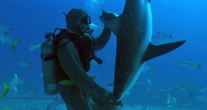 Δύτης ακινητοποιεί καρχαρία με μια απλή κίνηση (Video)