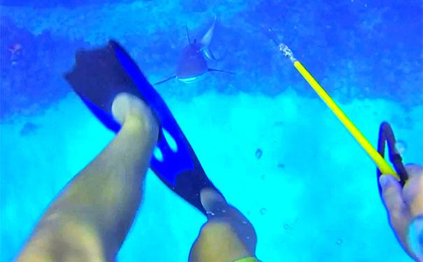 Δύτης κατέγραψε την επίθεση που δέχθηκε από καρχαρία