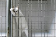 Η πονηρή γάτα που τρέλανε το Internet με την απόδραση της
