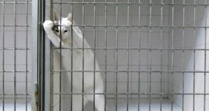 Η πονηρή γάτα που τρέλανε το Internet με την απόδραση της (Video)