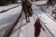Κοριτσάκι έβγαλε για βόλτα το πιο φιλικό άλογο στον κόσμο