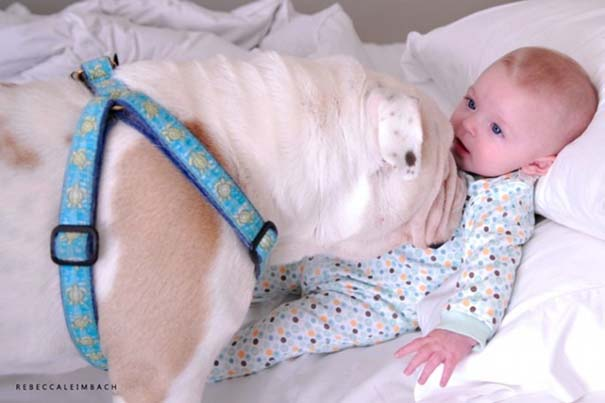 Κοριτσάκι με αγγλικό bulldog (1)