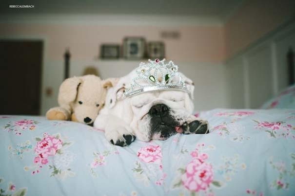 Κοριτσάκι με αγγλικό bulldog (7)