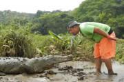 Κοσταρικανός ταΐζει κροκόδειλο σαν να ήταν κατοικίδιο σκυλάκι
