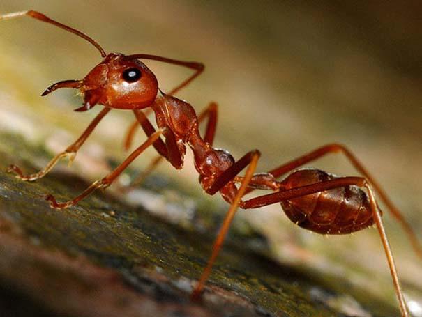 Τα μυρμήγκια έχουν τον τρόπο τους να προστατεύονται από τα πουλιά (1)