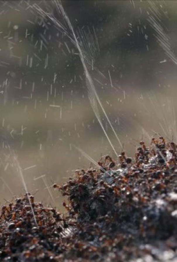 Τα μυρμήγκια έχουν τον τρόπο τους να προστατεύονται από τα πουλιά (3)
