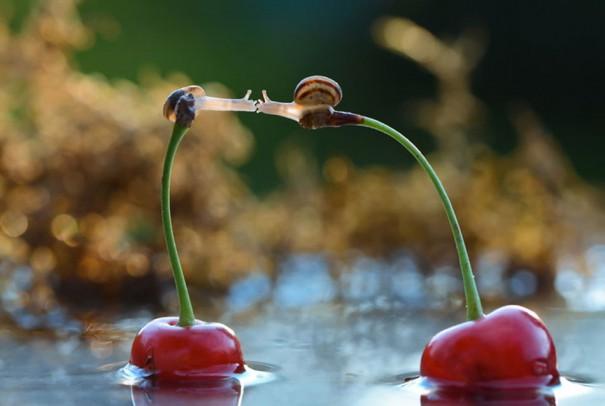 Φιλί πάνω σε δυο κεράσια | Φωτογραφία της ημέρας
