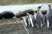Πιγκουίνοι έρχονται αντιμέτωποι με ένα σκοινί στο δρόμο τους