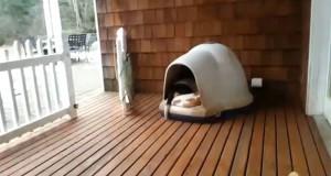 Πόσοι σκύλοι χωράνε σε ένα μικρό σκυλόσπιτο; (Video)