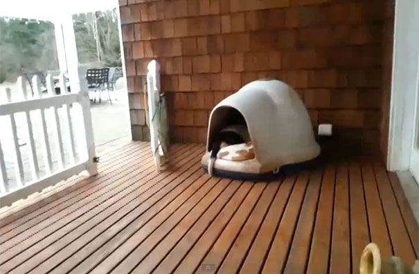 Πόσοι σκύλοι χωράνε σε ένα μικρό σκυλόσπιτο;
