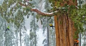 Πως γίνεται η φωτογράφηση ενός γιγάντιου δέντρου