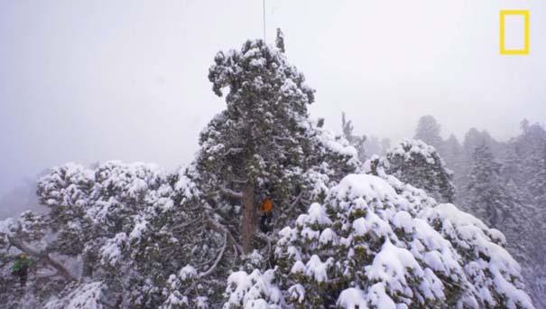 Πως γίνεται η φωτογράφηση ενός γιγάντιου δέντρου (3)