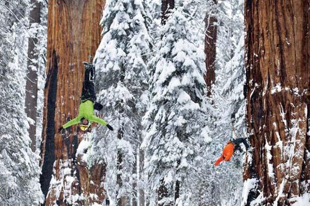 Πως γίνεται η φωτογράφηση ενός γιγάντιου δέντρου (4)