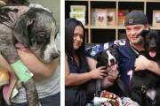 Σκύλοι πριν και μετά τη διάσωση τους (8)
