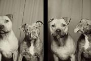 Σκύλοι σε φωτογραφικό θάλαμο (1)