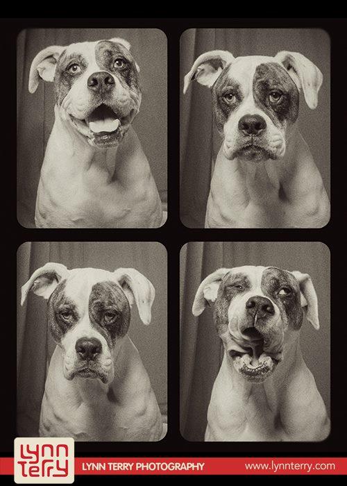 Σκύλοι σε φωτογραφικό θάλαμο (2)
