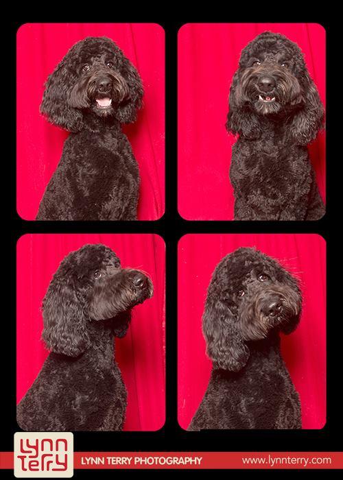 Σκύλοι σε φωτογραφικό θάλαμο (3)