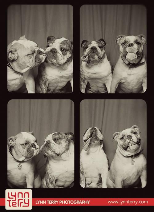 Σκύλοι σε φωτογραφικό θάλαμο (4)