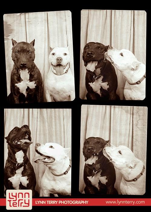 Σκύλοι σε φωτογραφικό θάλαμο (5)