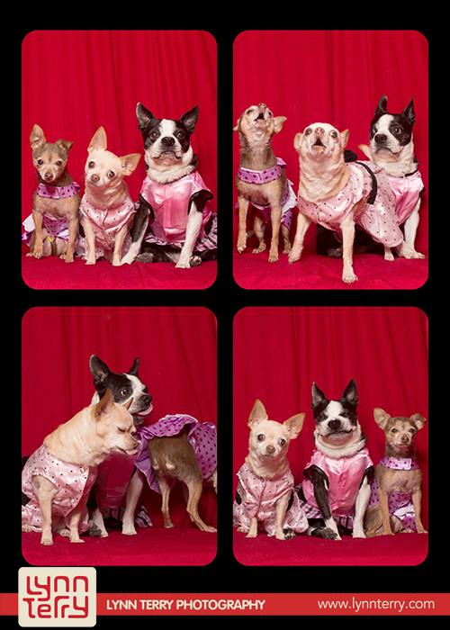 Σκύλοι σε φωτογραφικό θάλαμο (6)