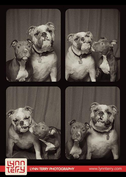 Σκύλοι σε φωτογραφικό θάλαμο (7)