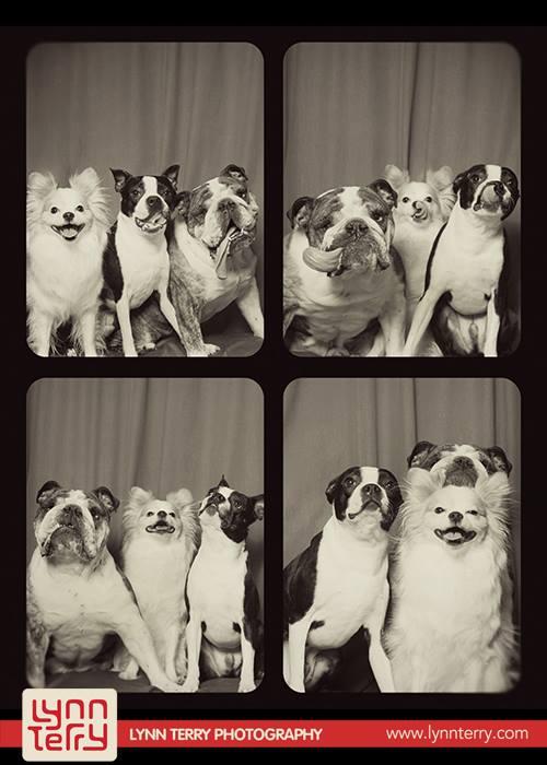 Σκύλοι σε φωτογραφικό θάλαμο (8)