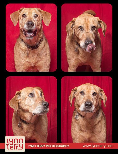 Σκύλοι σε φωτογραφικό θάλαμο (9)