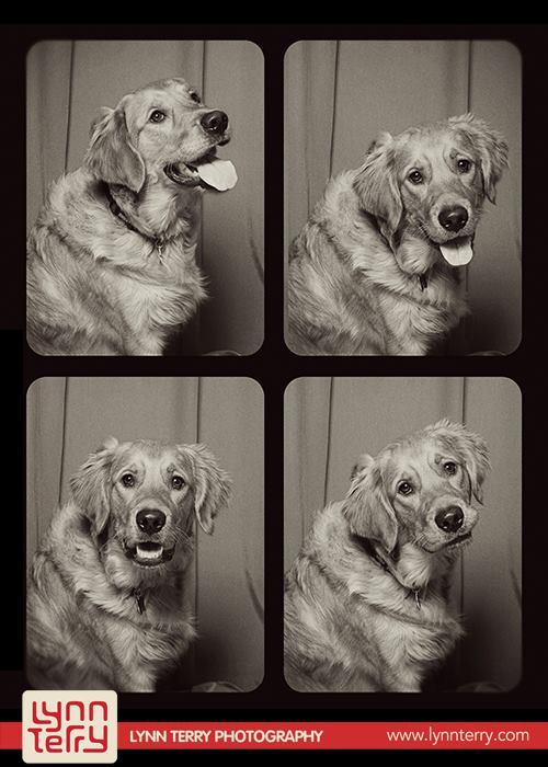 Σκύλοι σε φωτογραφικό θάλαμο (10)