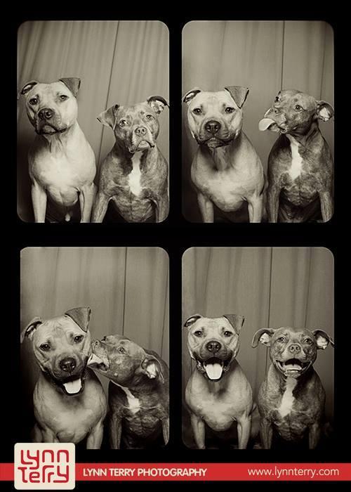 Σκύλοι σε φωτογραφικό θάλαμο (11)