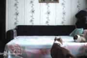 Τι κάνει αυτός ο σκύλος όταν μένει μόνος στο σπίτι;