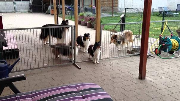 Οι πιο υπομονετικοί και υπάκουοι σκύλοι που έχετε δει