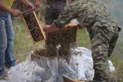 460.000 μέλισσες (1)