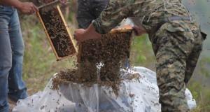 Ένας Κινέζος αποφάσισε να καλύψει το σώμα του με 460.000 μέλισσες