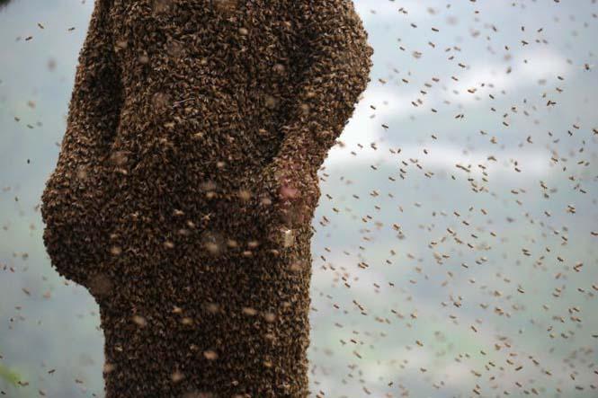460.000 μέλισσες (8)