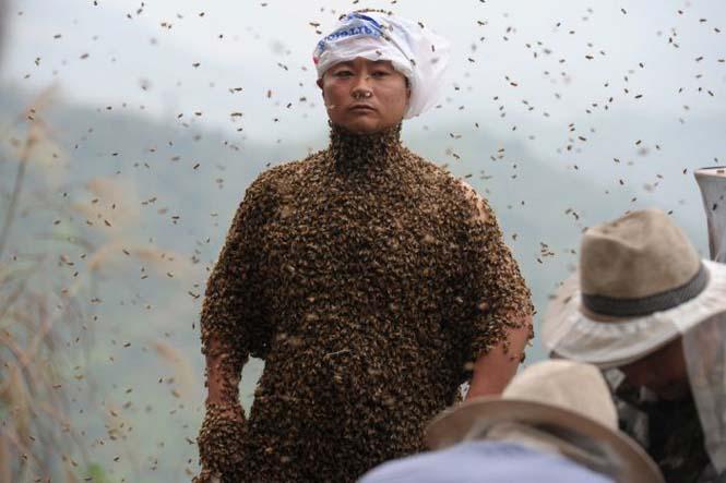 460.000 μέλισσες (9)