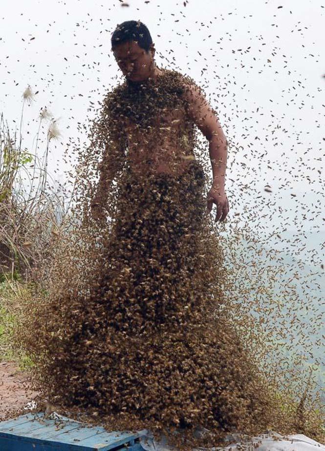 460.000 μέλισσες (10)