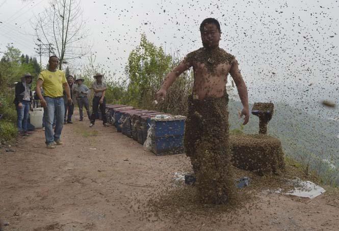 460.000 μέλισσες (11)